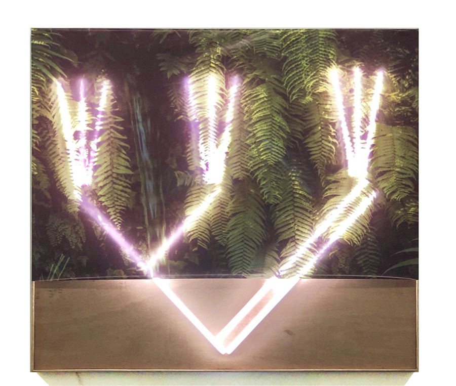 ws. Phylogeny Tree, Size 181,5 x 205 cm, Lacquered Photo, LED Neon Mounted On Wood Panel, 2018,